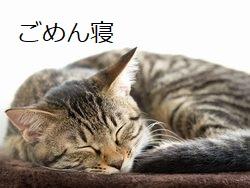 ごめん寝する猫